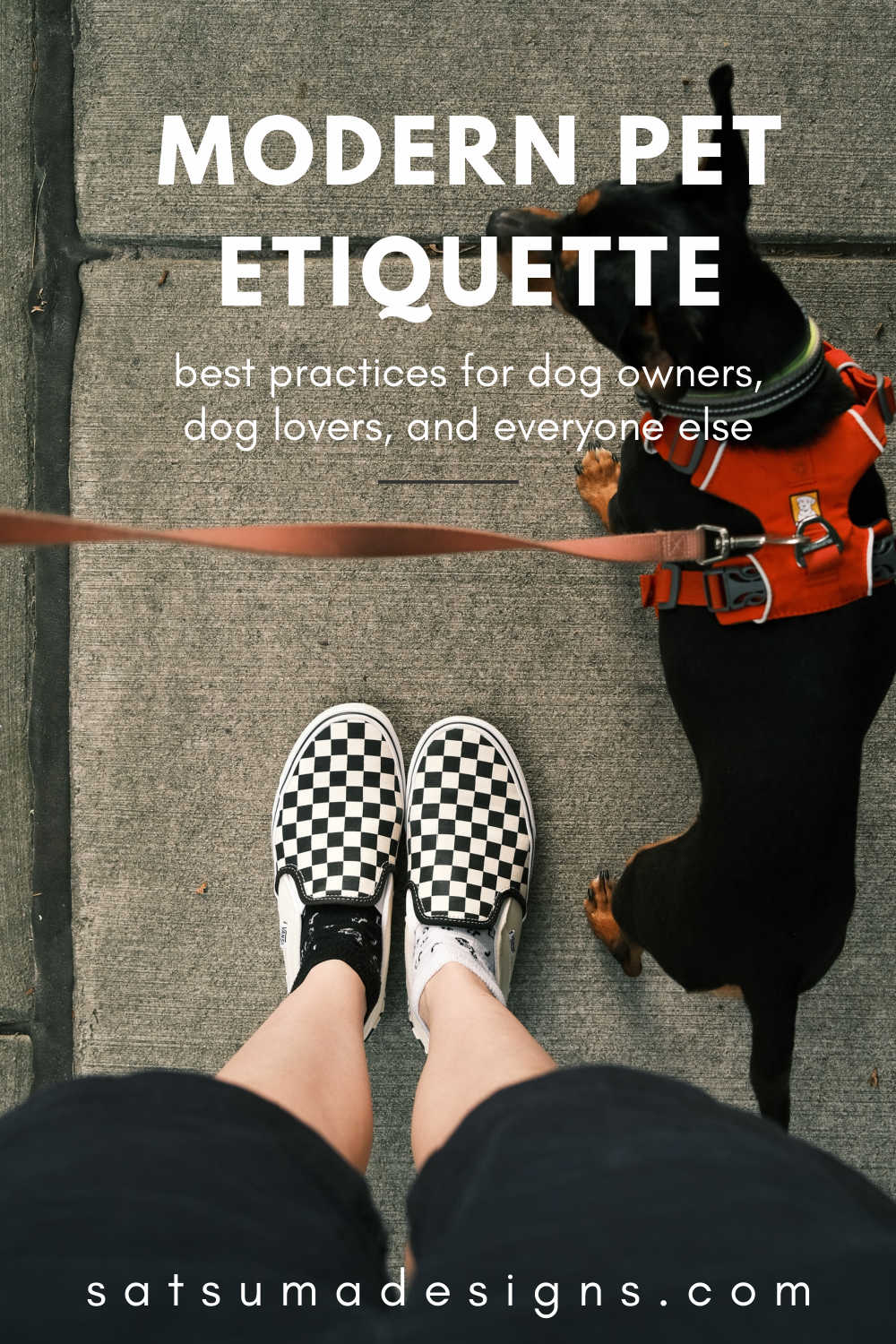 Person in black and white vans shoes holding dog leash with black dog wearing red harness