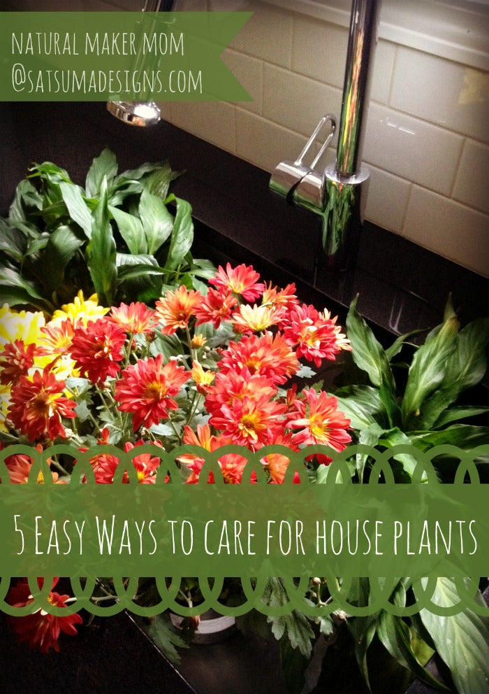 easy ways to care for house plants