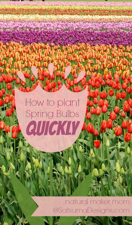 how to plant spring bulbs quickly