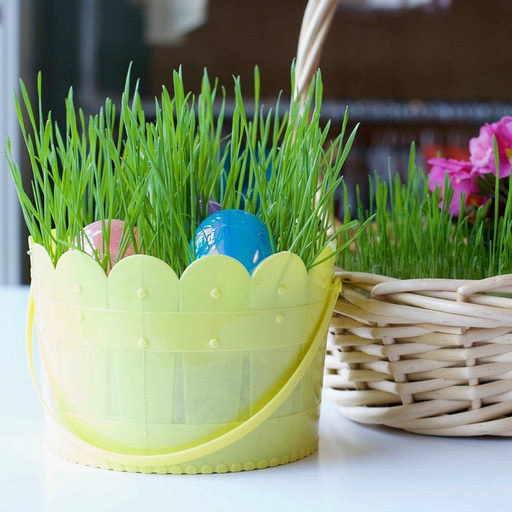 Grow a living easter basket satsuma designs grow a living easter basket diy easter grass basket negle Images
