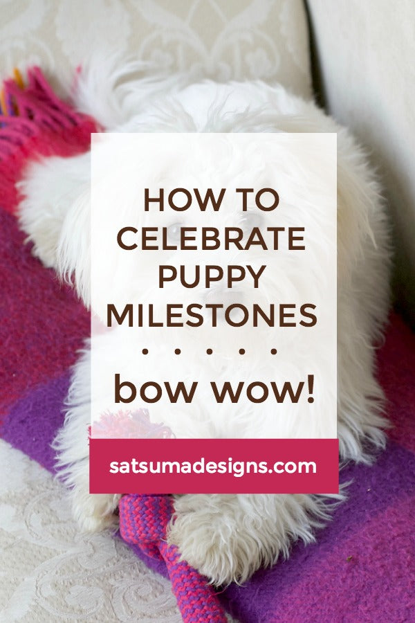 Click through to see how to celebrate puppy milestones and choose the right products for pup | SatsumaDesigns.com #puppy #puppylife