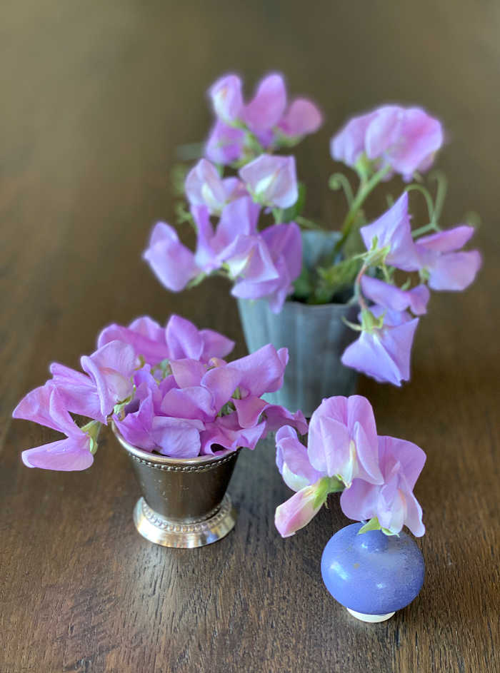Photo of sweet pea flowers in a miniature mint julep cup