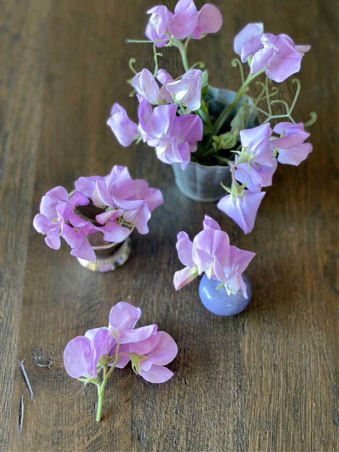 Photo of sweet pea flower blooms on a table top