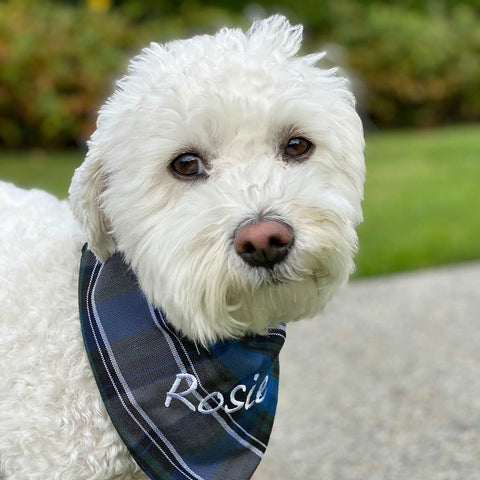 Embroidered pet bandana in three sizes