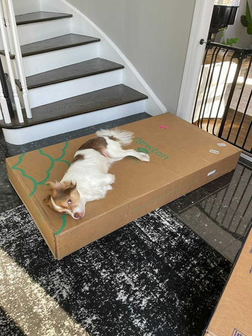 dog laying on a furniture box near the stairs