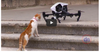VIDEO: Cats VS Drones Compilation