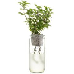 ECO PLANTER - ORGANIC MINT