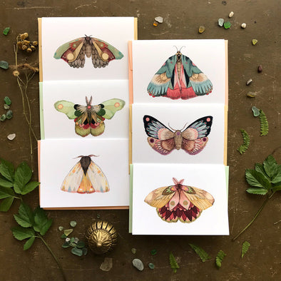 Collector: Moths //Set 2 Greeting Cards