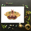 5x7 Art Print: Collector: Moth 11