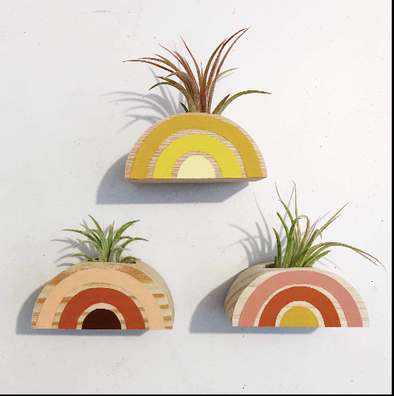 Rainbow Air Plant Magnet (PLANT INCLUDED)
