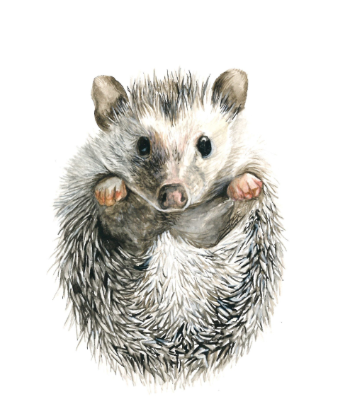 Hedgehog 5x7 Art Print