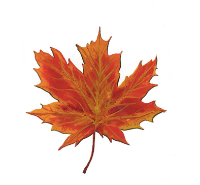 Maple Leaf 5x7 Art Print
