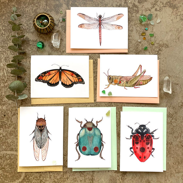 Bug Collection - Greeting Card Pack