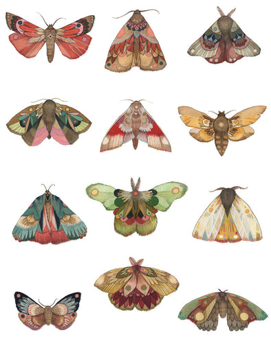 11X14 Art Print Collector: The Moths