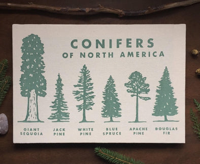 Conifers Canvas