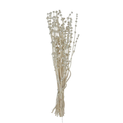 Dried Natural Lion's Tail Bunch