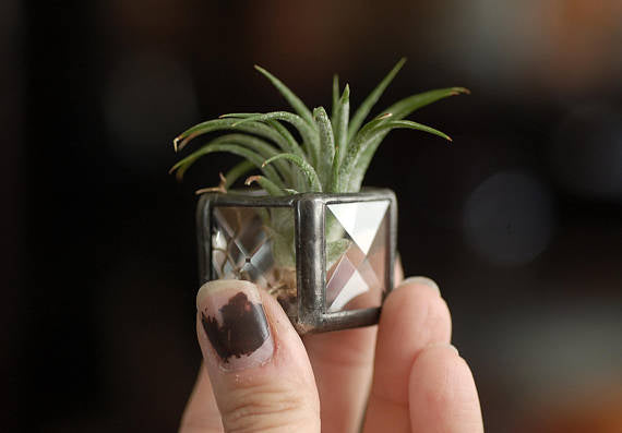 Faceted Glass Square Air Plant Holder- Mini-WATERBURY