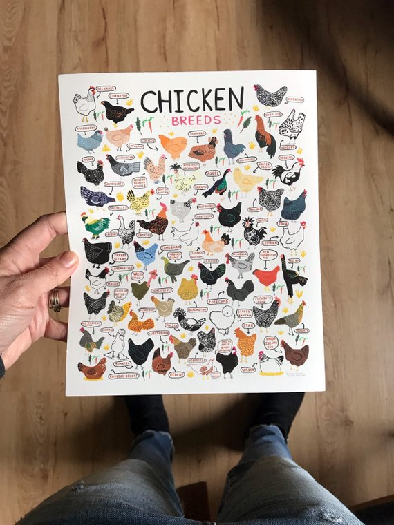 11x14  Chicken Breeds Print