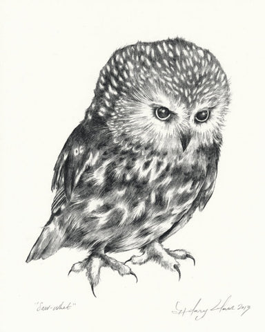Saw-Whet Owl 8x10 Print // by Hilary Ann Love Glass