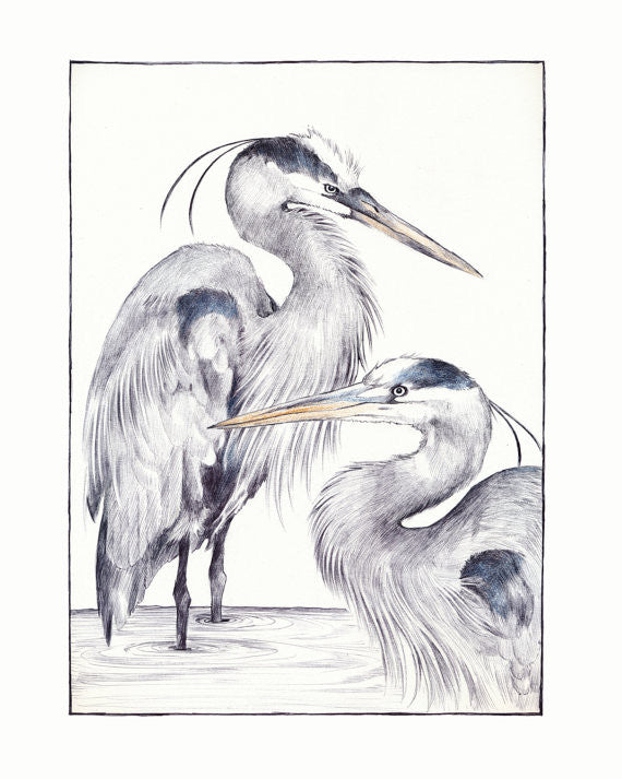 "Great Blue Heron Print 8.5"" x 11"" // by Hilary Ann Love Glass"