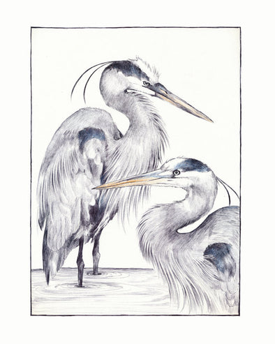 "Great Blue Heron Print 11"" x 14"" Print"
