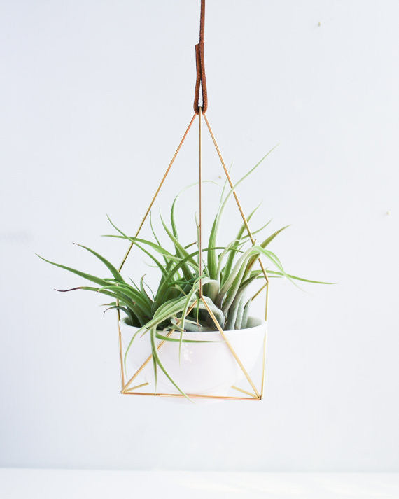 Hanging Brass Air Plant Holder 1' Leather Cord