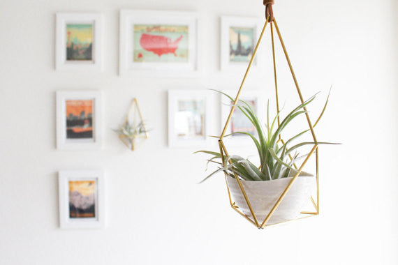 Hanging Brass Air Plant Holder 2' Leather Cord