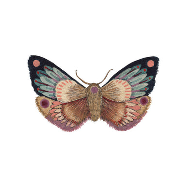 5x7 Art Print: Collector: Moth 10