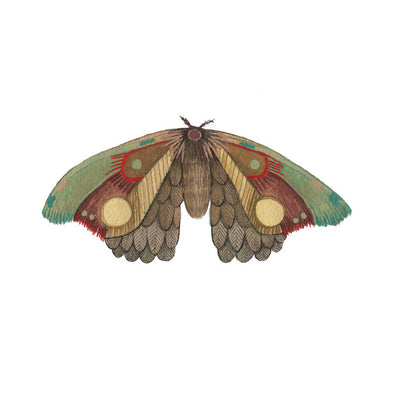 5x7 Art Print: Collector: Moth 12