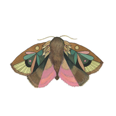 5x7 Art Print: Collector: Moth 4