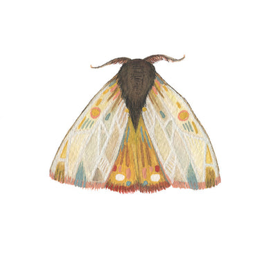 5x7 Art Print: Collector: Moth 9