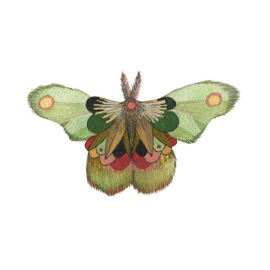 5x7 Art Print: Collector: Moth 8