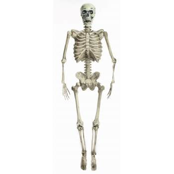 60 Inch Poseable Skeleton Prop