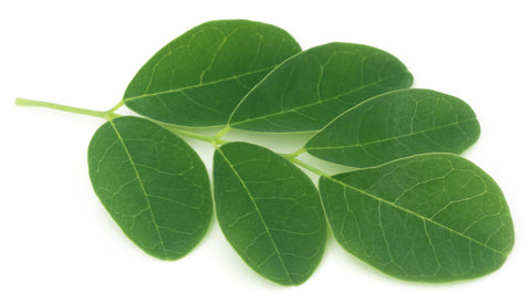 moringa diabetes treatment