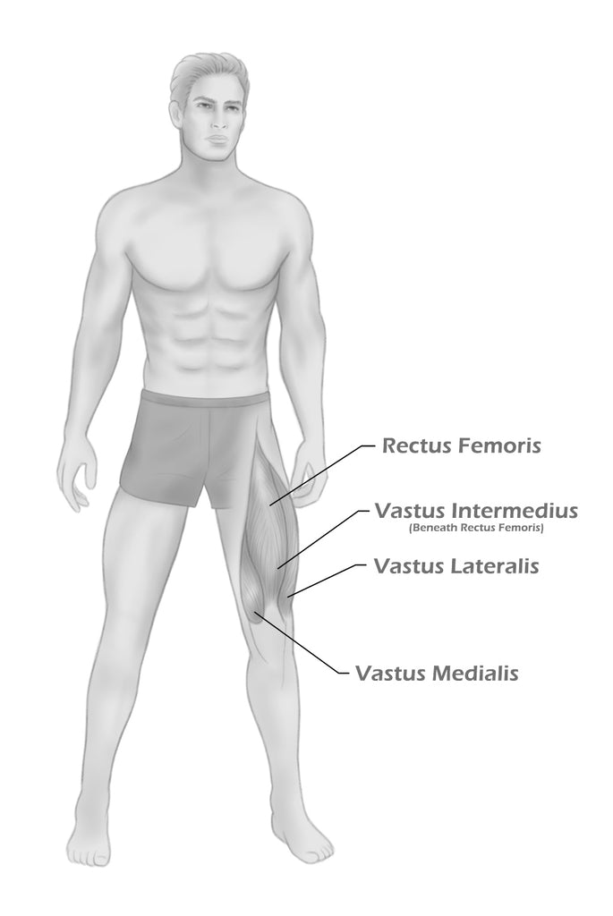 anatomical drawing human musculature