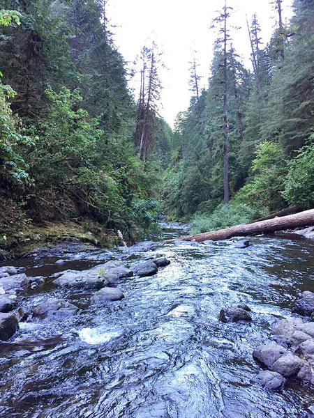 Eagle Creek Trail Lower Punchbowl Falls CRG Oregon hiking