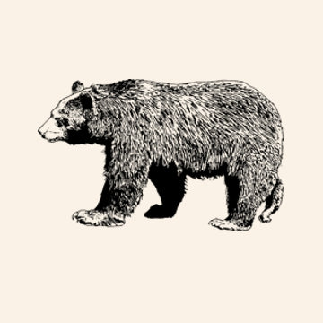 Black Bear Organic Cotton Children's T-Shirt