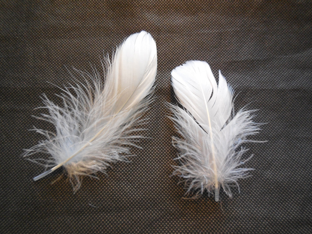 2pcs White Stripped Hat Mount feather Millinery DIY craft feathers for sale