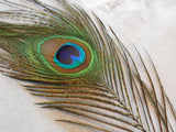 A Piece of peacock Hat Mount feather Millinery / DIY craft feather around25-29cm