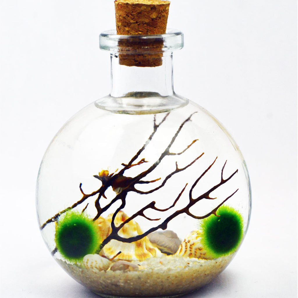 Aquatic Terrarium// Marimo Terrarium// Bottle