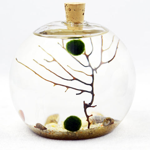 Aquatic Terrarium// Bubble// Natural