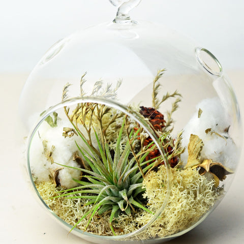 Harvest// Air Plant Terrarium