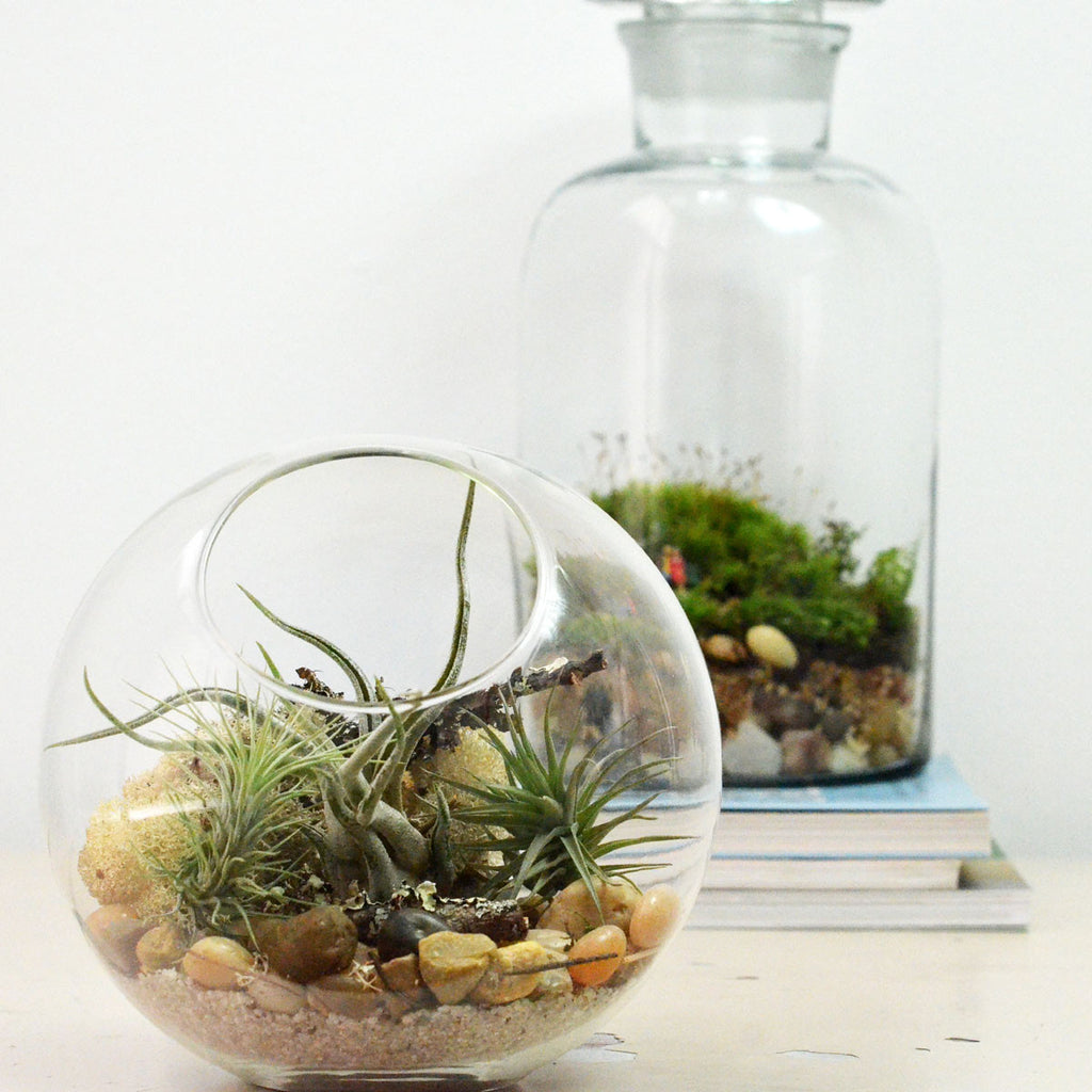 Half Slope Bubble// Small// Air Plant Terrarium