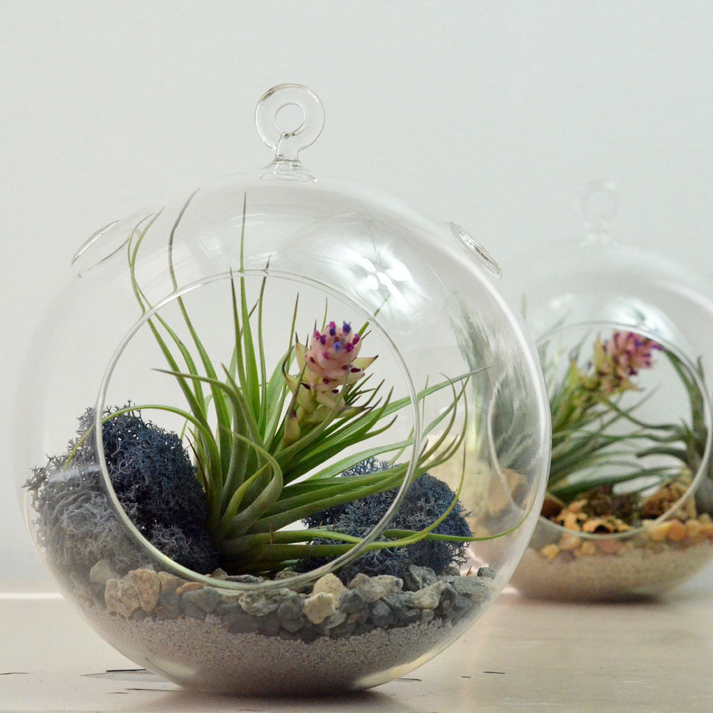 Large Air Plant Terrarium// Grey