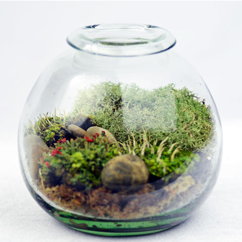 Lichen Terrarium// Large// DIY Kit