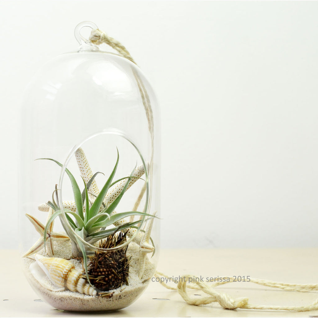 White Beach// Tall Orb Terrarium