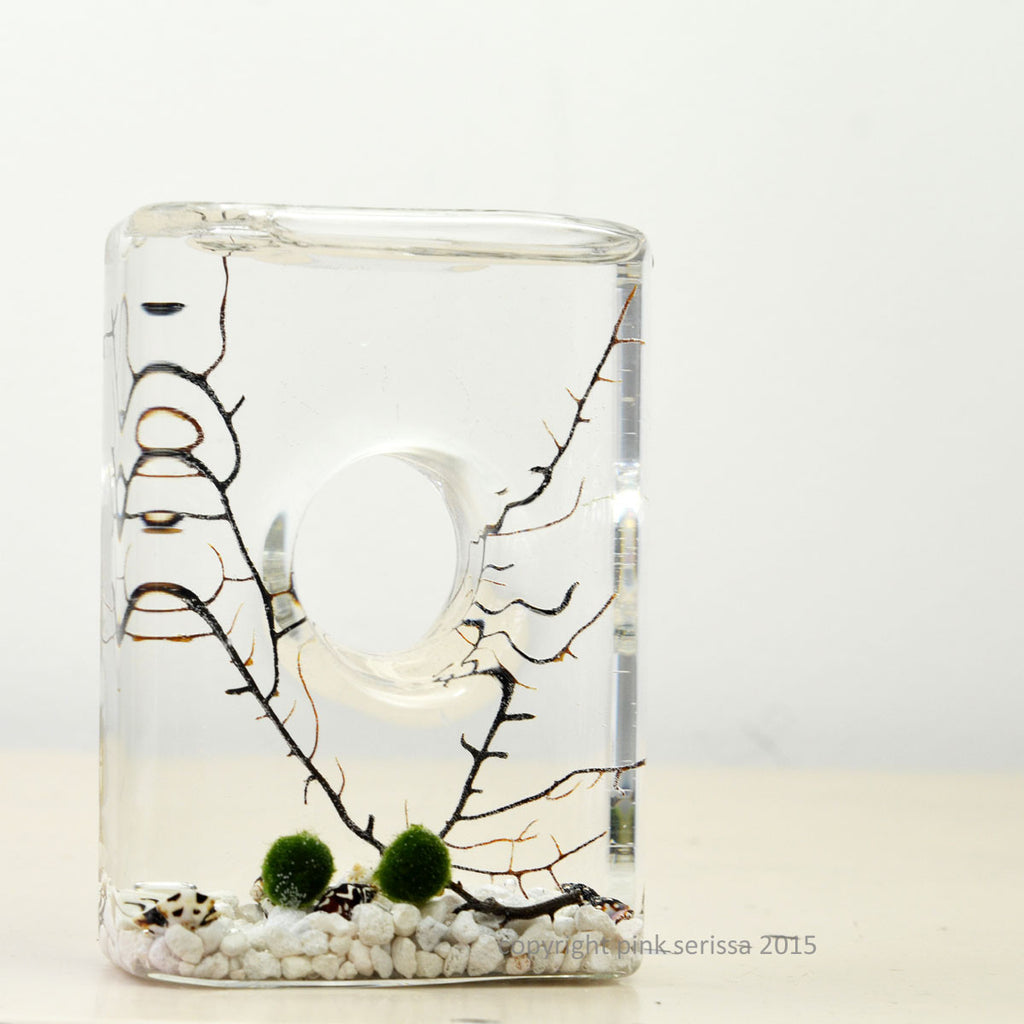 Marimo Aquatic Terrarium// Void