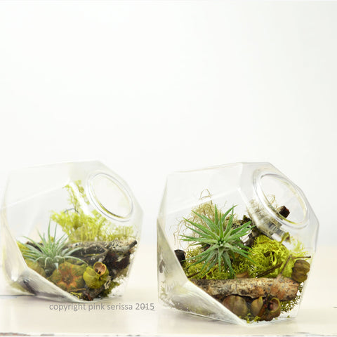 Miniature Air Plant Terrarium// Gem