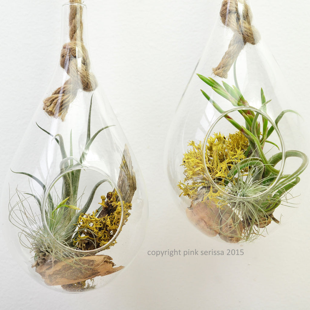 Rope Terrarium// Small// Air Plant Terrarium