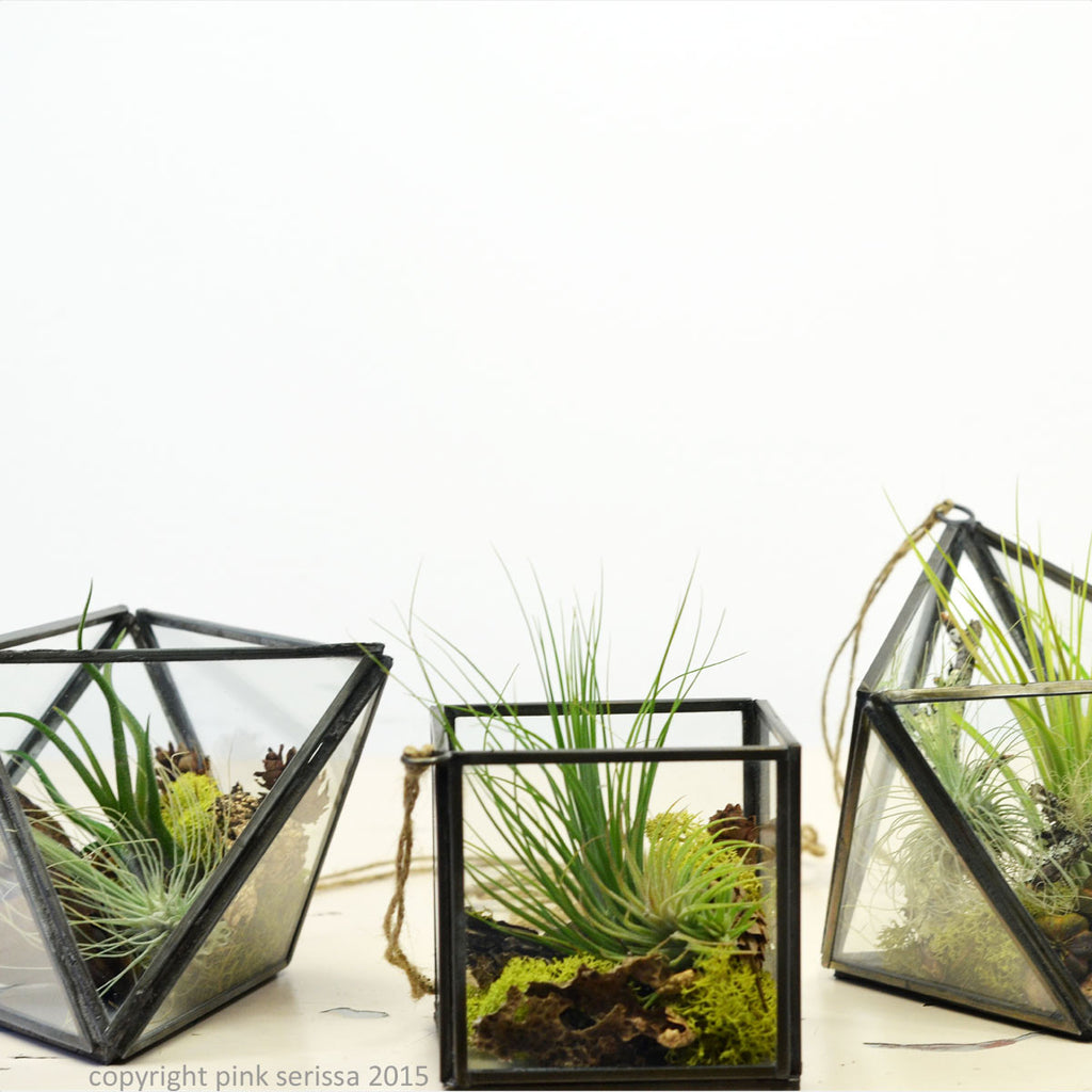 Hanging String Garden// Set of three Geometric Air Plant Terrariums